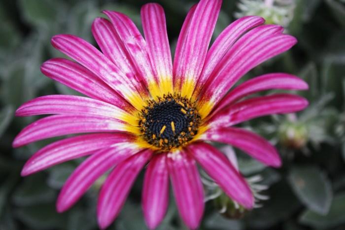 A flower at Central Tilba