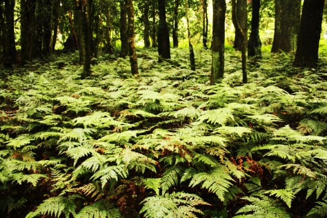 Luscious Rainforest