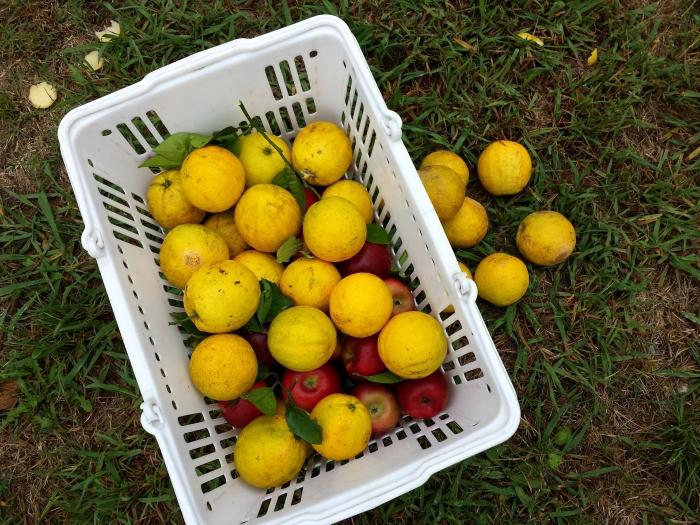 Lemon Loots