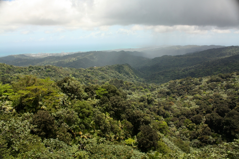 Luscious Rainforest from the top of Yokahu Tower